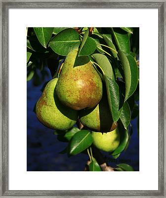 All Natural Framed Print