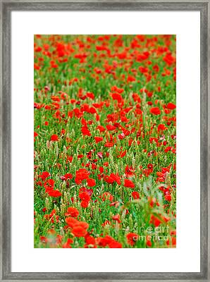 All Red Flower Beautiful Framed Print by Boon Mee