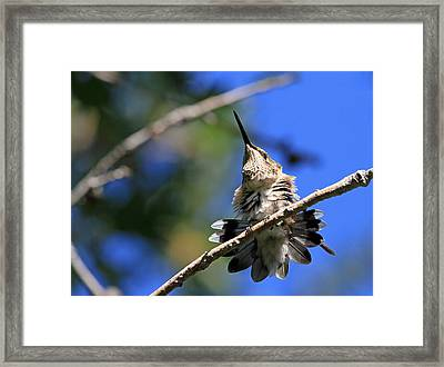 All Shook Up  Framed Print by Donna Kennedy