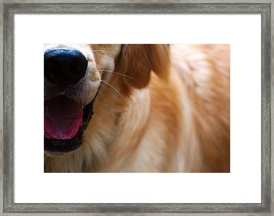 All Smiles Framed Print by Kara  Stewart
