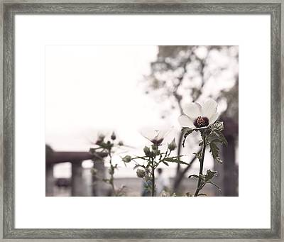 All That Remains Framed Print by Brooke T Ryan