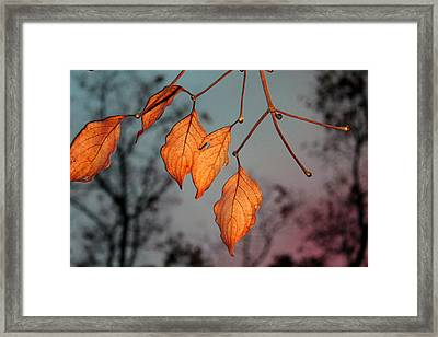 All That's Left Framed Print by Dolores  Deal