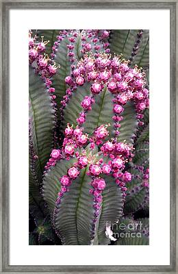 All The Cactus Are Happy Framed Print