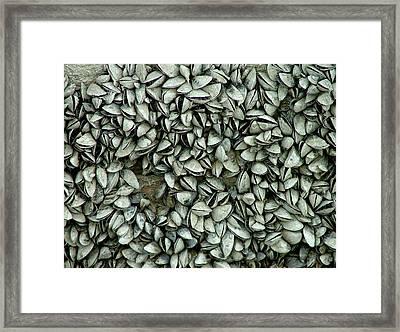 All The Shells Framed Print