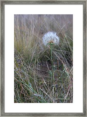 Framed Print featuring the photograph All The Small Things by Ruth Jolly