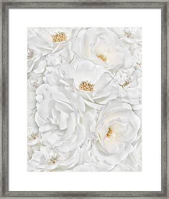 All The White Roses  Framed Print