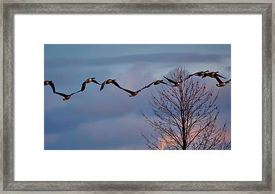 All Tohether Now Framed Print