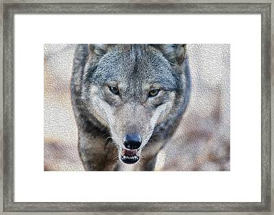 All Wolf Framed Print by Karol Livote