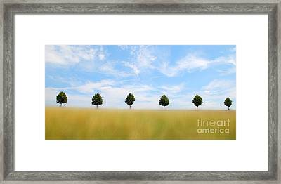 Allee  03 Framed Print by Hannes Cmarits