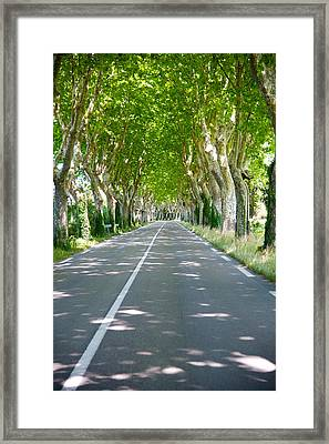 Allee Of Trees, St.-remy-de-provence Framed Print by Panoramic Images