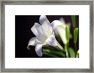Framed Print featuring the photograph Allelujah by Cathy Donohoue