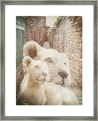 Alley Cat Framed Print