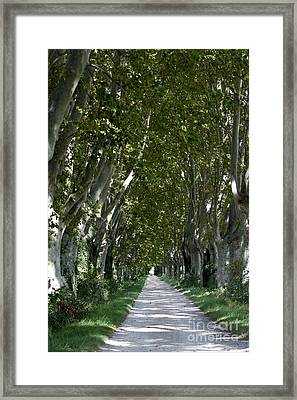 Alley Of Plane Trees. Provence. France Framed Print
