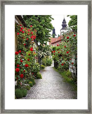 Alley Of Roses Framed Print