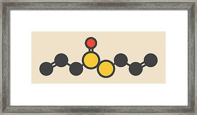 Allicin Garlic Molecule Framed Print