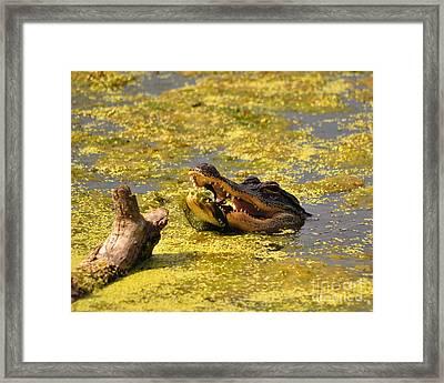 Alligator Ambush Framed Print by Al Powell Photography USA