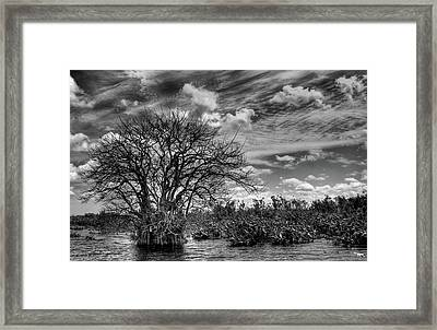 Framed Print featuring the photograph Alligator Country by Geraldine Alexander