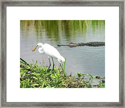 Alligator Egret And Shrimp Framed Print