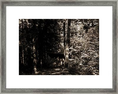Alligator Head Near South Lake, Catskill Mountains Framed Print