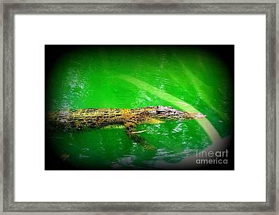 Alligator In Australia Framed Print by John Potts