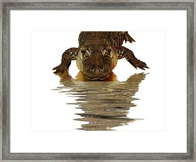 Alligator Making Eye Contact With You Framed Print by Linda Matlow