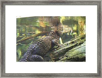 Alligator - National Aquarium In Baltimore Md - 12123 Framed Print