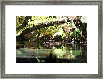 Alligator - National Aquarium In Baltimore Md - 12124 Framed Print by DC Photographer