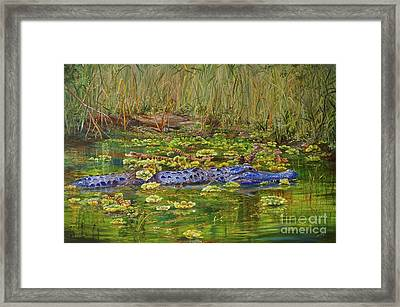 Alligator Pod Framed Print
