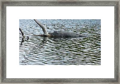Framed Print featuring the photograph Alligator Resting On A Log by Ron Davidson