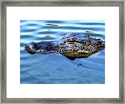 Alligator With Spider Framed Print by Robin Lewis