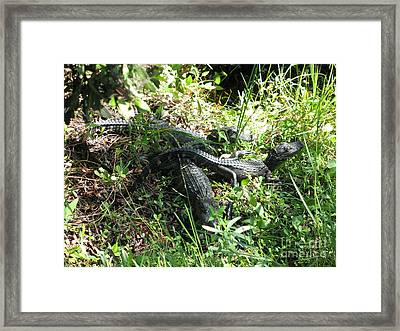 Alligatorbabys Waiting For Mommy Framed Print by Christiane Schulze Art And Photography