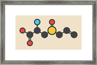 Alliin Garlic Molecule Framed Print