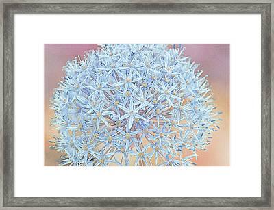 Framed Print featuring the digital art Allium Bursting by Susan  McMenamin