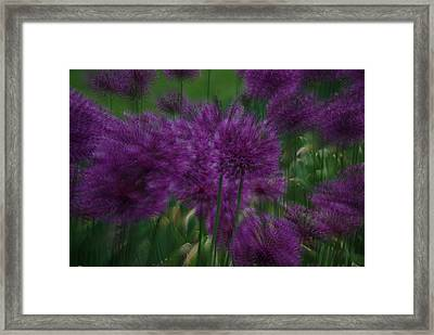 Allium Double Exposure Framed Print by Ken Dietz