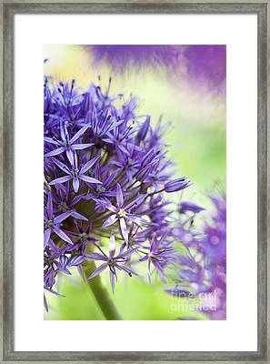 Allium Globemaster Abstract Framed Print