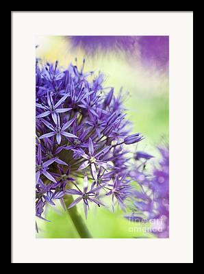 Flower Anthers Framed Prints