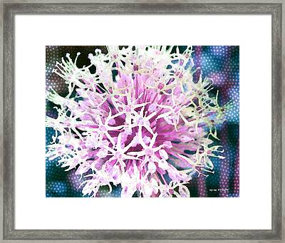 Allium Series - After The Rain Framed Print