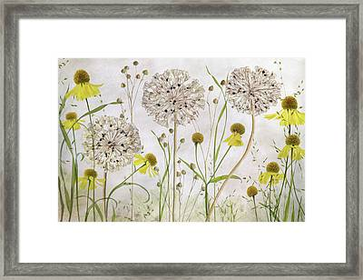 Alliums And Heleniums Framed Print