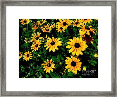 Sunflower Allure Framed Print