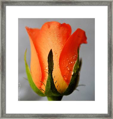 Allure Framed Print