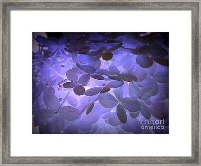 Alluring Hydrangeas Framed Print