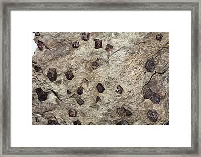 Almandine Crystals In Schist Framed Print