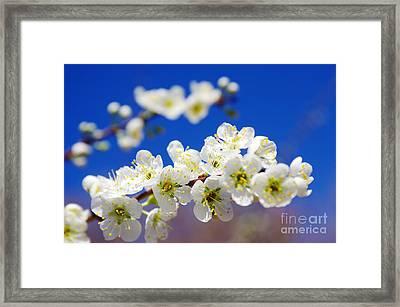 Almond Blossom Framed Print by Carlos Caetano