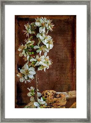 Almond Blossom Framed Print by Marco Oliveira