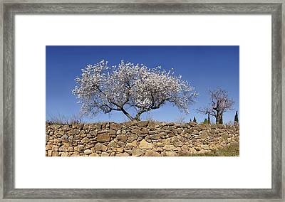 Almond Blossom Near The Town Framed Print by Panoramic Images