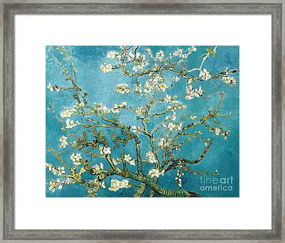 Almond Blossom  Framed Print by Pg Reproductions