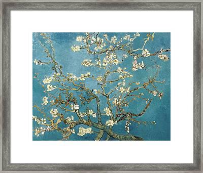 Almond Blossoms Framed Print by Vincent Van Gogh