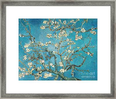 Almond Branches In Bloom Framed Print by Vincent van Gogh
