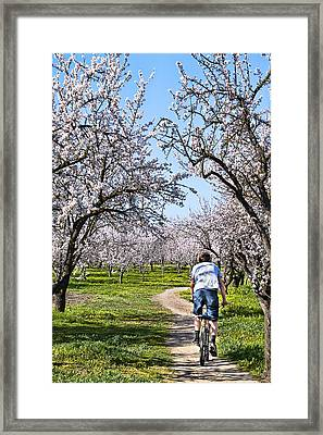 Almond Orchards In Full Bloom Framed Print by Abram House
