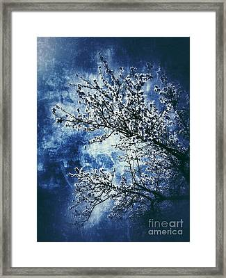 Almond Tree #2 Framed Print by Angela Bruno